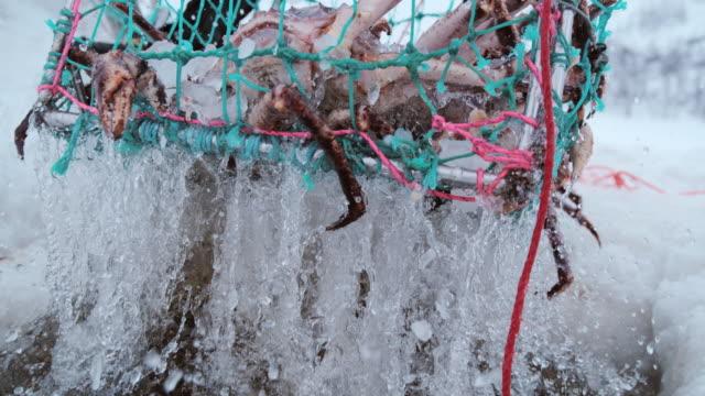 slo mo pulling up a trap with king crabs - łowić ryby filmów i materiałów b-roll