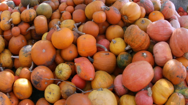 Pumpkin galore Local farmer's market during in the autumn season celebrating Halloween and Thanksgiving, City of Wroclaw in Poland heap stock videos & royalty-free footage