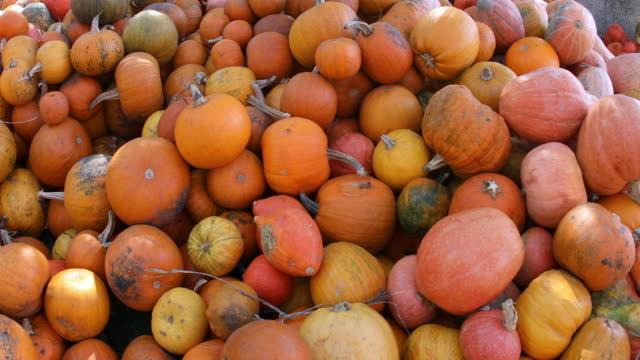 pumpkin galore - pumpkin stock videos & royalty-free footage