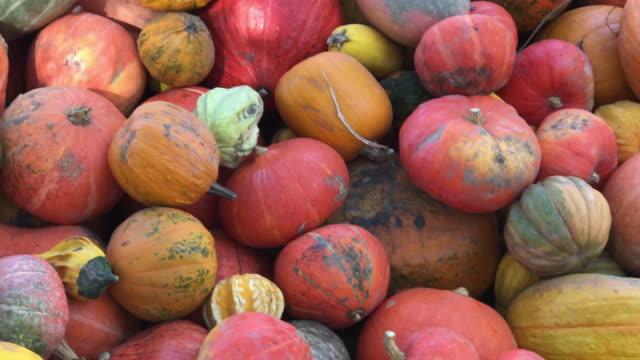 Pumpkin galore