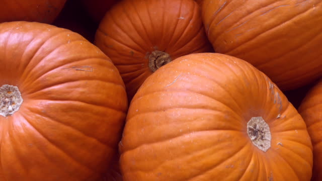 pumpkin patch video footage - zucchini video stock e b–roll