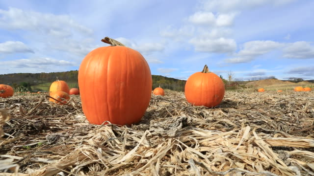 Pumpkin patch video