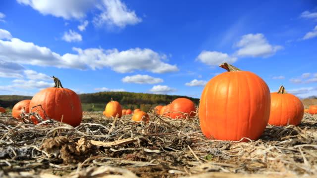 тыквенное поле - pumpkin стоковые видео и кадры b-roll