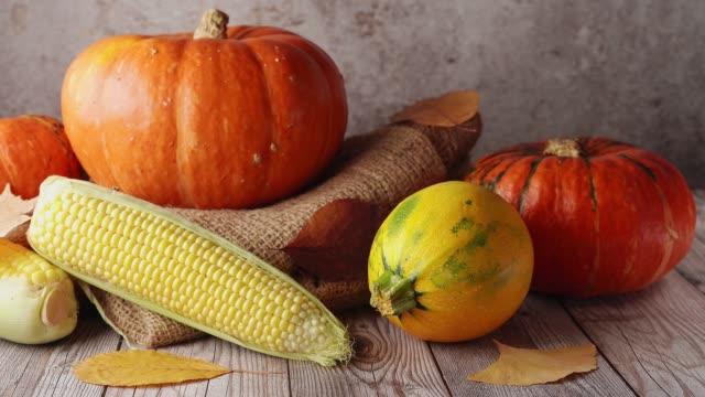 pumpkin, squash for happy thanksgiving day - pumpkin pie стоковые видео и кадры b-roll