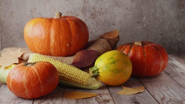 pumpkin still life on rustic background. autumn concept - pumpkin pie стоковые видео и кадры b-roll