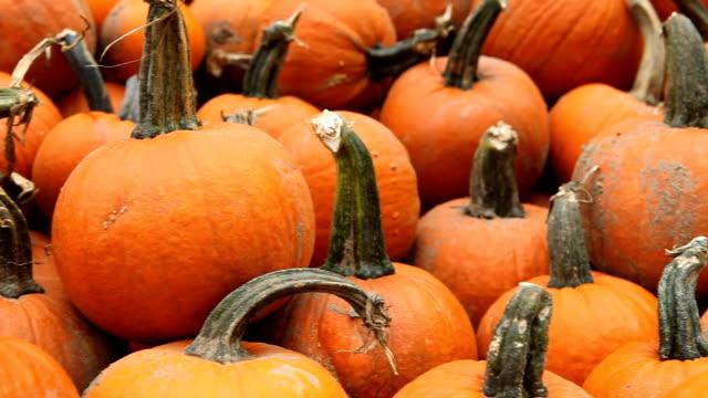 тыквы изобилии - pumpkin стоковые видео и кадры b-roll