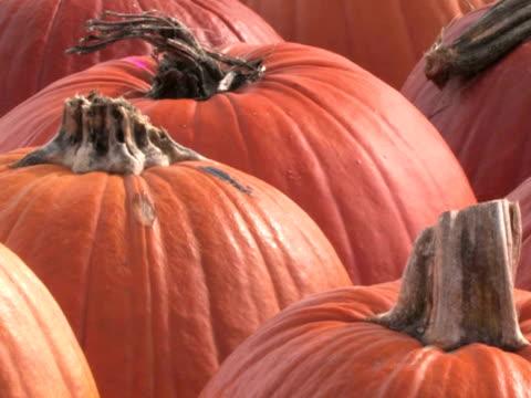 pumpkins panoramica - zucca legenaria video stock e b–roll