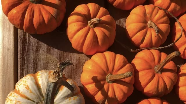 Pumpkins Panning Image Background Ready for Text