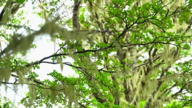 オーシャン ビューでプンタ アレナス ・ フォレストをハイキングします。 - デッキ点の映像素材/bロール