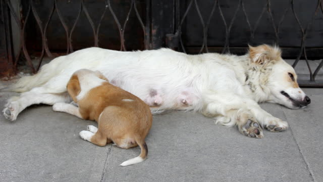 Puppies with mother Puppies with mother flea insect stock videos & royalty-free footage