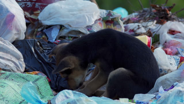 Puppies/Dog (feeding and sleeping) in a garbage dump in Sri Lanka Puppies (feeding and sleeping) in a garbage dump in Sri Lanka leftovers stock videos & royalty-free footage