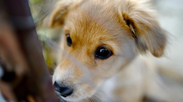 Puppy behind wire