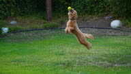 istock Puppy Catching a Tennis Ball 1278897251
