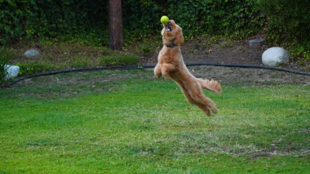 Puppy Catching a Tennis Ball