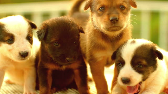 Puppy Cute HD1080p: Puppies and sunlight . puppy stock videos & royalty-free footage