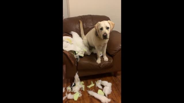 Puppy destruction