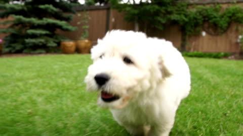 cucciolo cane in esecuzione con gioia. - carino video stock e b–roll