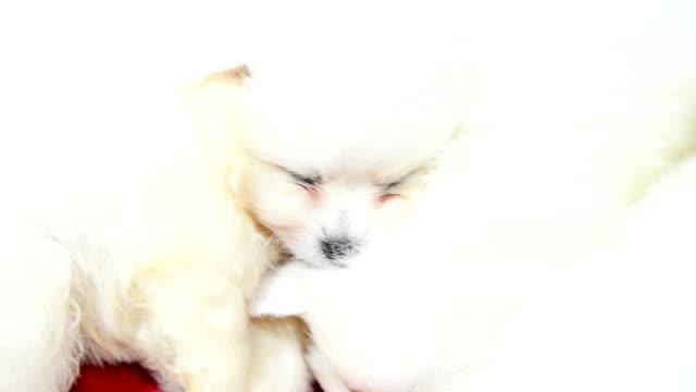 HD - Puppy dog video