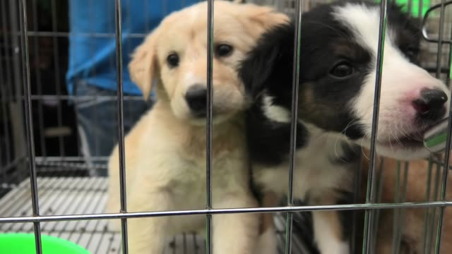 puppy dogs in cage drinking
