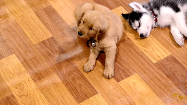 Puppy dogs video
