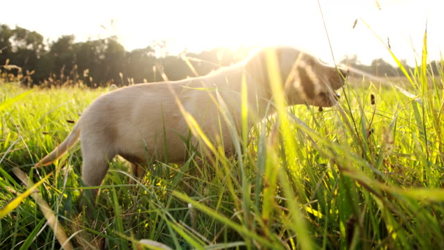SLO MO Puppy In The Grass video