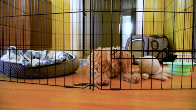 vídeos de stock e filmes b-roll de puppy inside his exercise pen - engradado