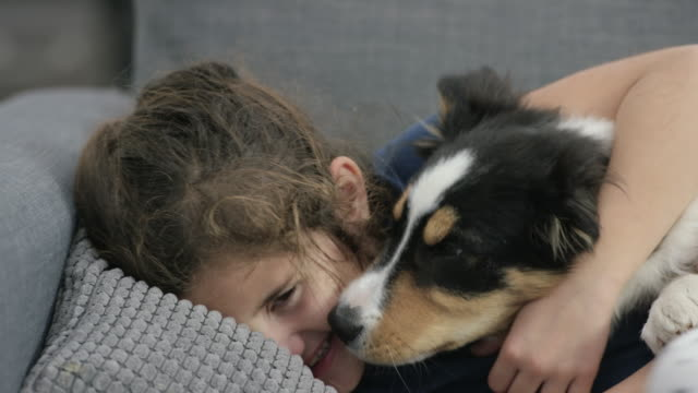 Puppy Kisses Elementary age ethnic girl laughing and smiling as her cute border collie puppy is licking her face on the couch. snack stock videos & royalty-free footage