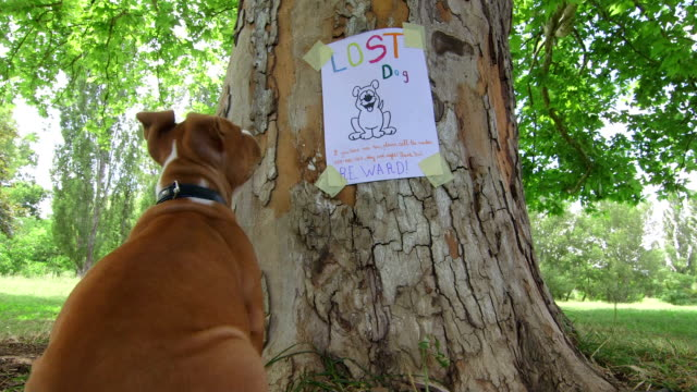Puppy looking at missing pet poster on tree trunk