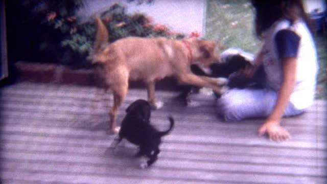 puppy love 1960's - sentimentalitet bildbanksvideor och videomaterial från bakom kulisserna