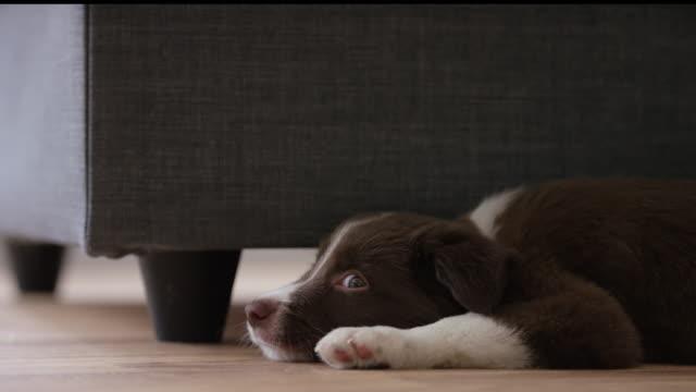 Puppy Nap video