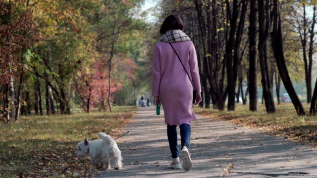 puppy on a leash. the girl in a pink coat keeps the dog on a leash - terrier video stock e b–roll