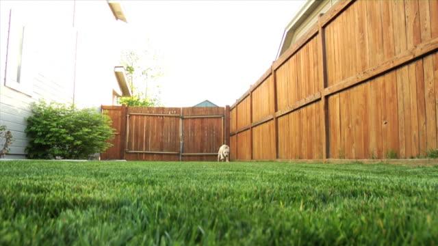 vídeos y material grabado en eventos de stock de cachorro corriendo hacia la cámara - valla límite
