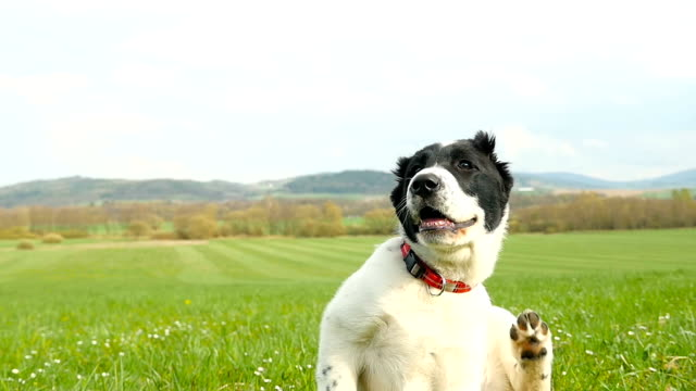 Puppy scratching - season of ticks!