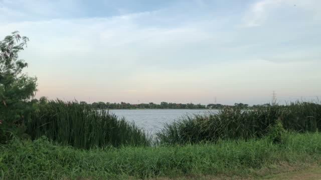 purity in rural scene video