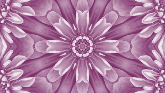 purple floral mandala background with copy space - мандала стоковые видео и кадры b-roll