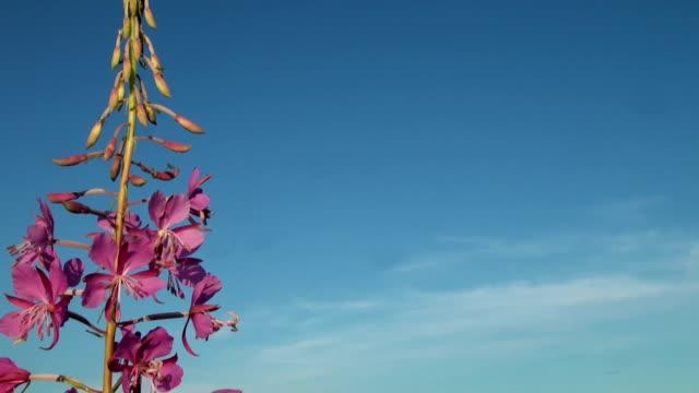 Purple flower in the sky video