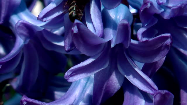 purple flower with bees