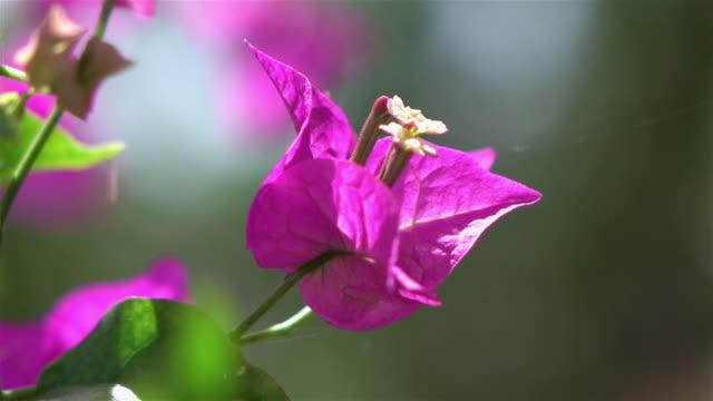 Purple flowers in the garden in slow motion 250fps
