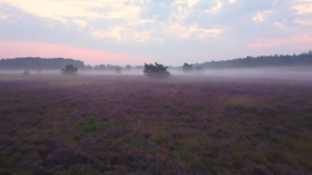 Purple Heath video