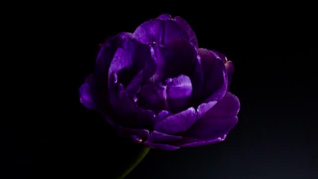 purple natrure flower video