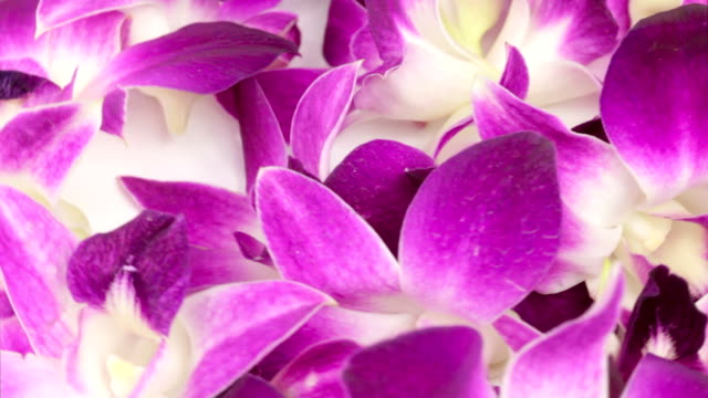 purple orchid flower heads video
