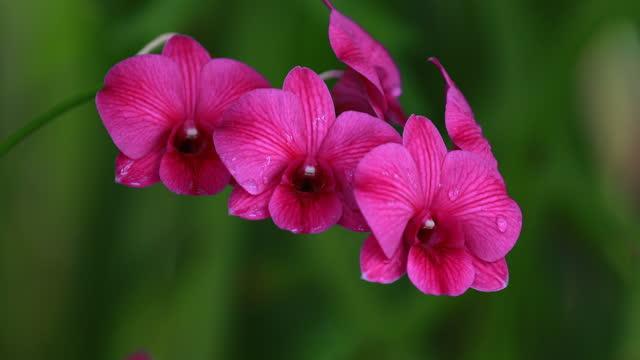 purple orchid flower under the rain drops