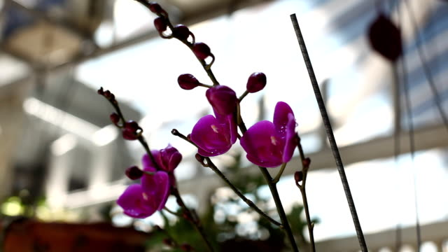Purple orchids in the garden video