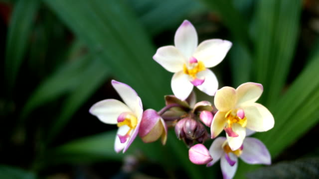 purple orchids video