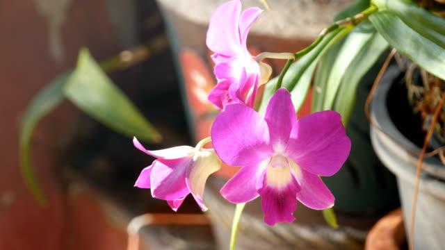 violetten orchideen - orchidee stock-videos und b-roll-filmmaterial