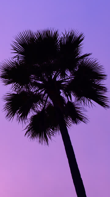 Purple Palm Tree