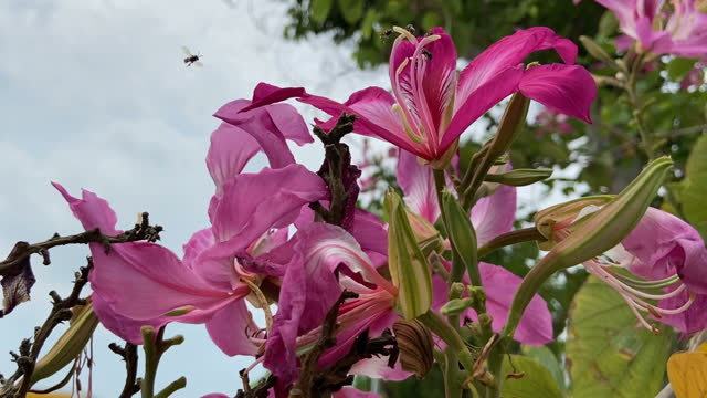 Purple Pink Orchid in Garden with Bee
