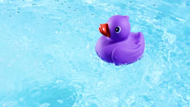 vídeos de stock e filmes b-roll de a purple rubber duck swimming from right to left through the picture, on the crystal clear water of a pool in summer light - brinquedos na piscina
