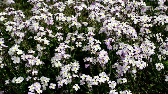 SERIES: Purple wildflowers video