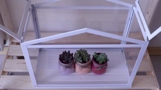 putting ots of different colorful succulents in terrarium, pink, green, spring, indoors, hobby, DIY, hand, gardening, planting video